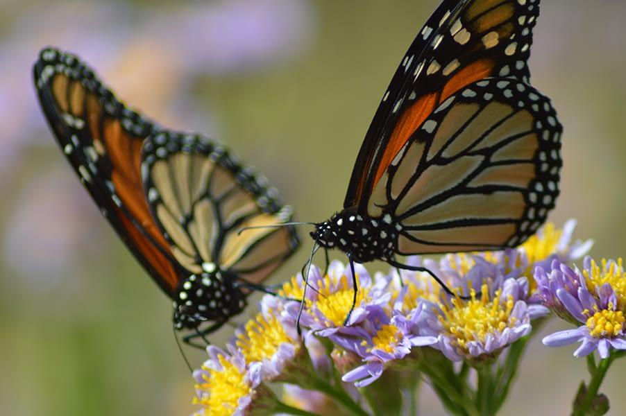 Pollinatin' Twins